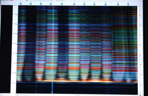 Spectral karyotyping sequencing (SKY)